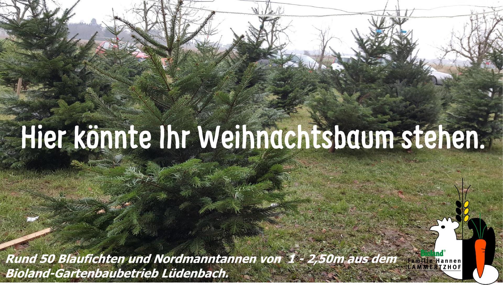 Weihnachtsbaum Tannenbaum Verkauf Lammertzhof Kaarst