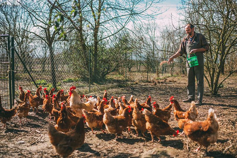 Hühner füttern (Foto: Hojabr Riahi)