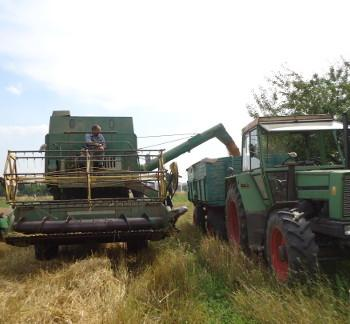 Getreideernte auf dem Lammertzhof