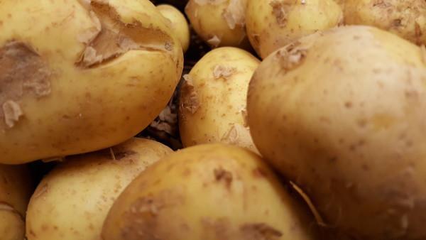 Fruehkartoffeln