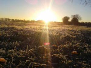 frostfeld