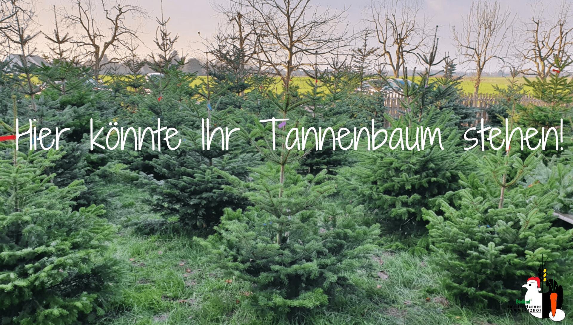 Tannenbaum Kosten